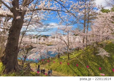 高田城址公園のお花見 22011614