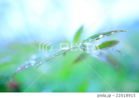 雨露と葉 22018915