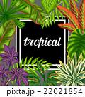 トロピカル 熱帯 パラダイスのイラスト 22021854