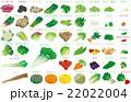 野菜いろいろ 22022004