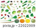 野菜いろいろ 22022009