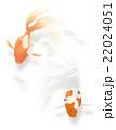 金魚 22024051