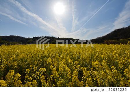 菜の花畑と太陽(香川県高松市香川町) 22035226