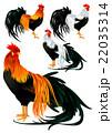 鶏 鳥 酉のイラスト 22035314
