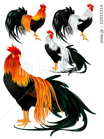 尾長鶏のイラスト素材 22035314 Pixta