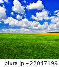 Green wheat field 22047199