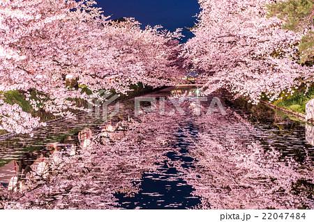 弘前公園の桜 外堀 22047484