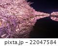 弘前公園の桜 西堀 22047584