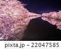弘前公園の桜 西堀 22047585