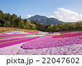 羊山公園 芝桜の丘 22047602