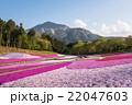 羊山公園 芝桜の丘 22047603