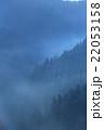 朝霧 早朝 杉林の写真 22053158