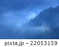 朝霧 早朝 杉林の写真 22053159