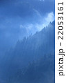 朝霧 早朝 杉林の写真 22053161
