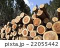 積み重ねられた伐採した杉の丸太 22055442