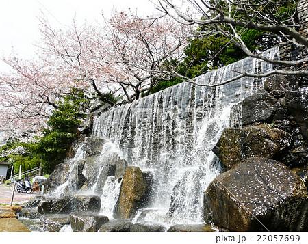 水元公園・水元桜大滝 22057699