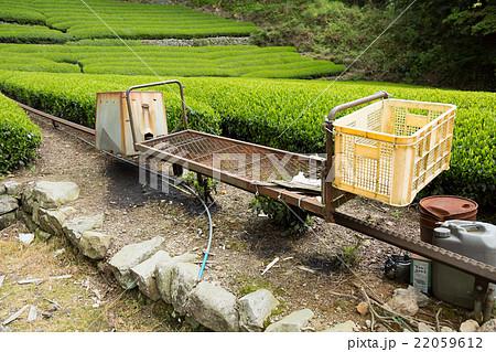 日本茶の茶畑とモノレール 茶農家イメージ 22059612