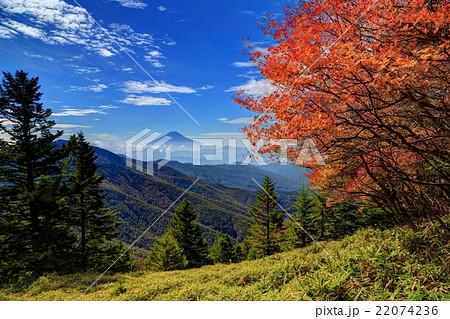 紅葉の大菩薩・石丸峠付近の笹原と富士山 22074236