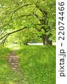 公園 道 木の写真 22074466
