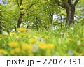 タンポポが咲く公園 22077391