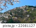 桜 山桜 花の写真 22081127