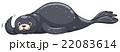 Seal with dark gray skin 22083614