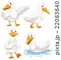 あひる アヒル 鳥のイラスト 22083640