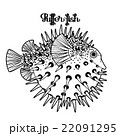 Graphic puffer fish 22091295