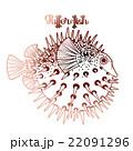 Graphic puffer fish 22091296