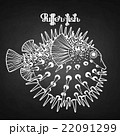 Graphic puffer fish 22091299