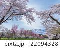 山 岩手山 桜の写真 22094328
