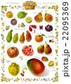 南仏のフルーツ 22095369