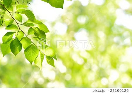 新緑 22100126