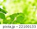 新緑 22100133