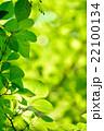 新緑 22100134
