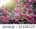 春 泉 ばねの写真 22106123