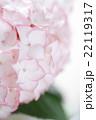 ピンクのアジサイの花 22119317