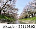 松川 桜 散り始め 22119392