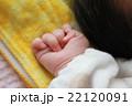 赤ちゃんの手 22120091