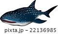 ジンベエザメ イラスト ベクター 22136985