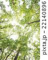 新緑 林 森の写真 22140896