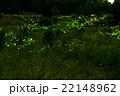 蛍 光 昆虫の写真 22148962