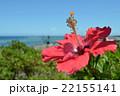 ハイビスカス 沖縄 リゾート 青空  夏 22155141