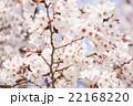 桜 22168220