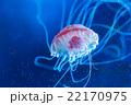 漂うクラゲ 22170975