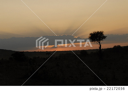 サファリの夕焼け 22172036