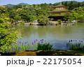 アヤメが最も美しく映えるのは金閣寺である。日本に京都があって良かった。 22175054