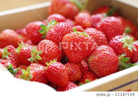 イチゴ箱買い 22187539
