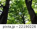 新緑 22190226