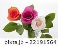 薔薇 花 植物の写真 22191564